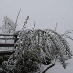 Struik aan hek met sneeuw